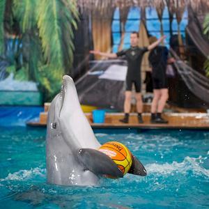 Дельфинарии, океанариумы Ейска