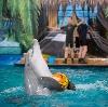 Дельфинарии, океанариумы в Ейске